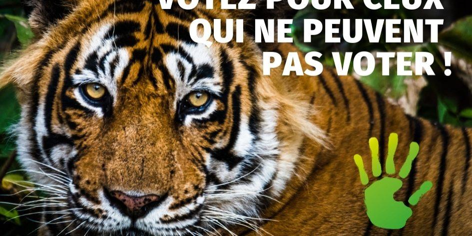 urgence-ecologie-tigre